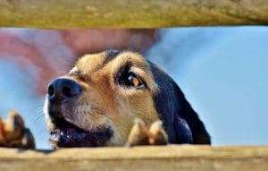 Best Fences For Dogs