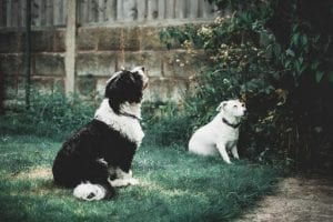 Best Privacy Fences For Dogs
