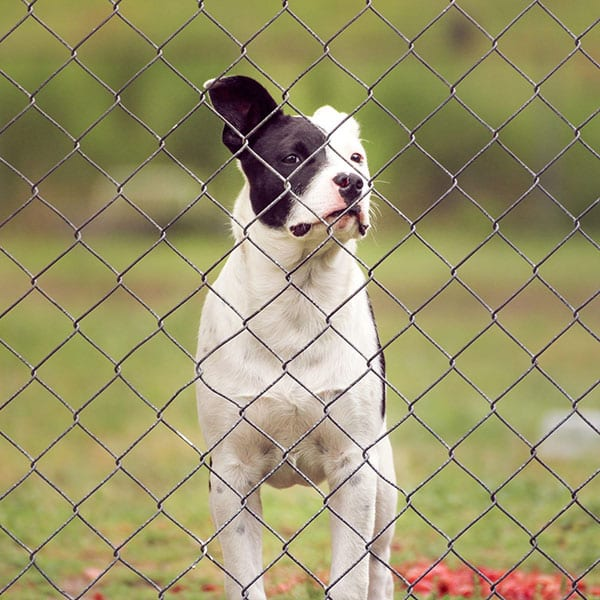 What Makes For A Good Dog Fence